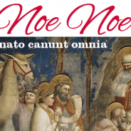 Noe Noe